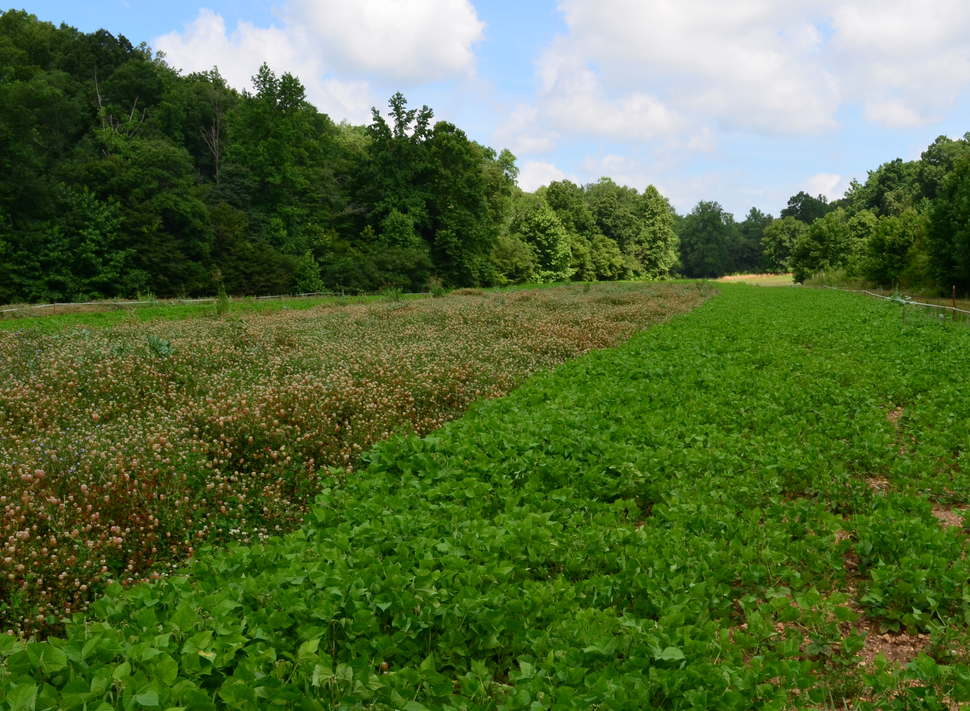 Food-plots-compete-with-weeds-for-nutrition-and-space