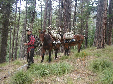 Student leading horses at York Outfitters hunting guide school