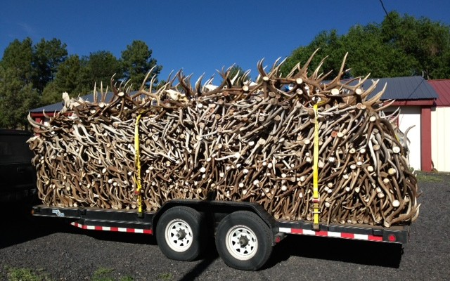 shed-antler-trailer-1-700x400