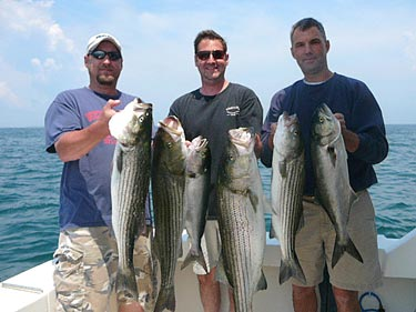 some schoolie stripers caught on the wafarer with captain ed jerome, classic Martha's Vineyard fishing