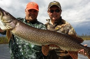 Non-stop trophy muskie fishing at Minor Bay Lodge