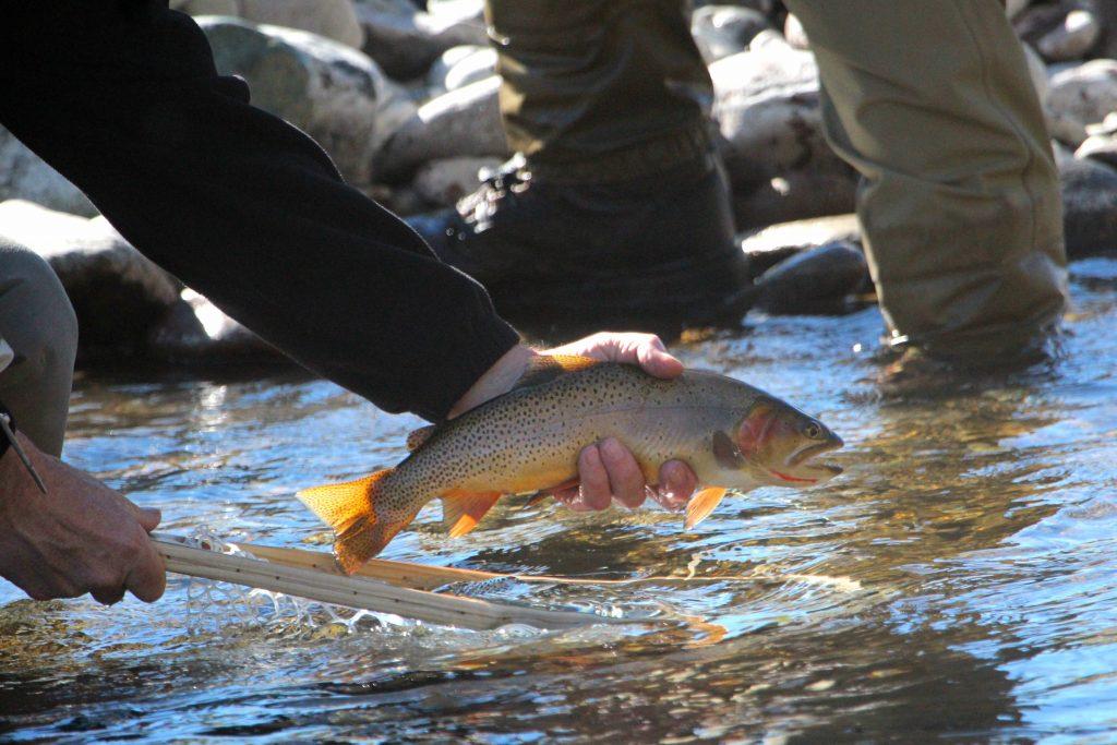 Wood River Ranch Fishing