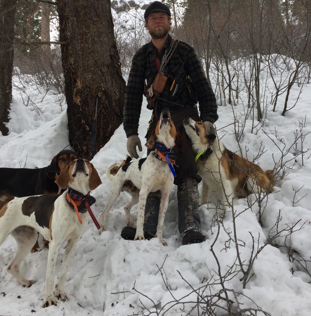 Hunting Mountain Lion with Hounds