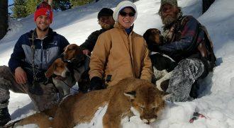 Mountain Lion Hunts