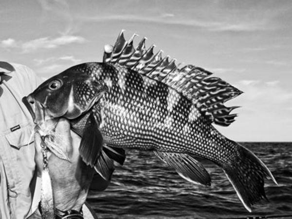 Black Sea Bass Love Diamond Jigs