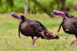 Five Turkey Hotspots Not Worth a Sit
