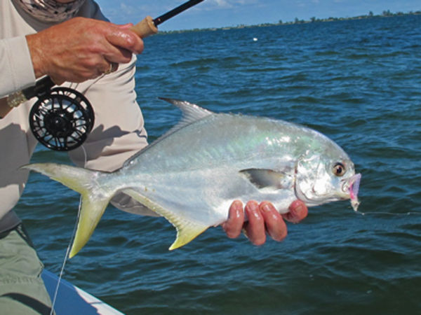 Fly fishing for pompano fin and field blog for Florida pompano fish