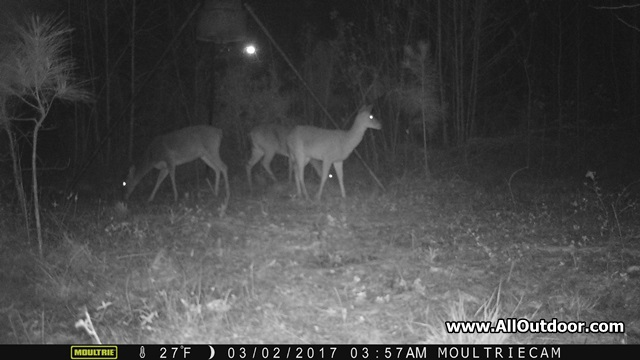 How Can Deer See in the Dark?