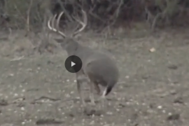 How to Drop a Deer in Its Tracks