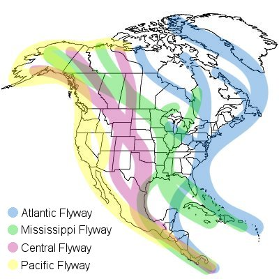 north america waterfowl migration flyways
