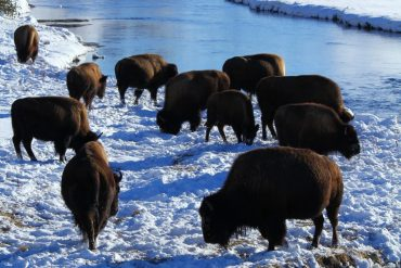 Outdoors in the Off Season: Winter in Yellowstone
