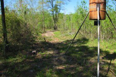 Planting Spring Deer Food Plot