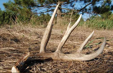 Shed Hunting is Illegal in This State!