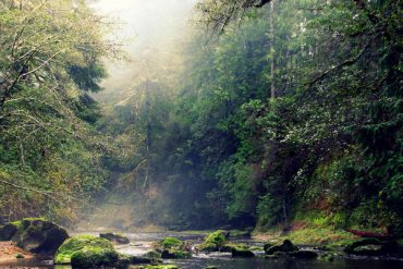 The Plan to Save Oregon's Elliott State Forest May Not Be Enough