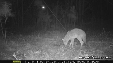 Trail Camera For Wildlife Observation