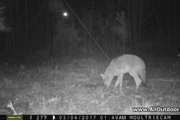 Trail Camera For Wildlife Observation