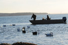 Why V-boards Make More Sense for Waterfowlers