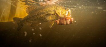 8 Essential Rules of Flyfishing for Bass