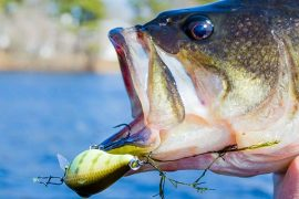Catch Your Biggest Bass of The Season