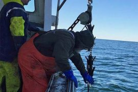 Fishing Gear Recovery Project Commences In Cape Cod Bay
