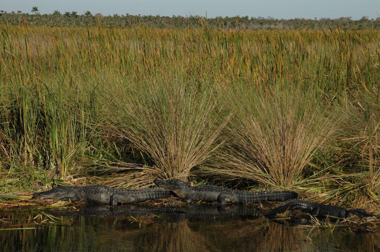Florida Senate Passes SB 10 to Build Reservoir