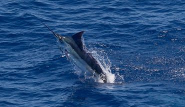 Marlin Fishing in the Abacos, Bahamas: An Angler's Playbook