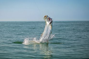 Mid-Atlantic Tarpon Tactics