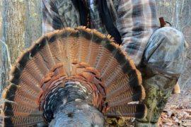 Run and Gun Gobbler: My First Longbeard Turkey Wasn't Looking for Love