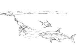 Shark Chum Drifter