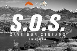 Simms Pledges To Save Our Streams