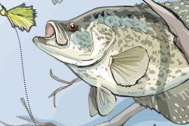 Three Tactics for Hooking Stubborn Spring Panfish