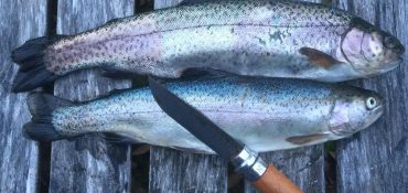 catch more stocked trout with these baits