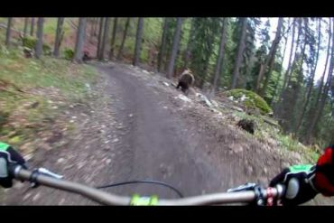 GoPro Footage: Huge Bear Chases Mountain Biker Down Trail