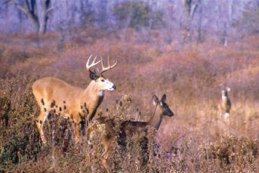 Indiana Deer Hunters Donate Enough Venison Last Season To Feed Over 250,000 People