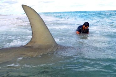Monster BlacktipH Shark Fishing From The Beach