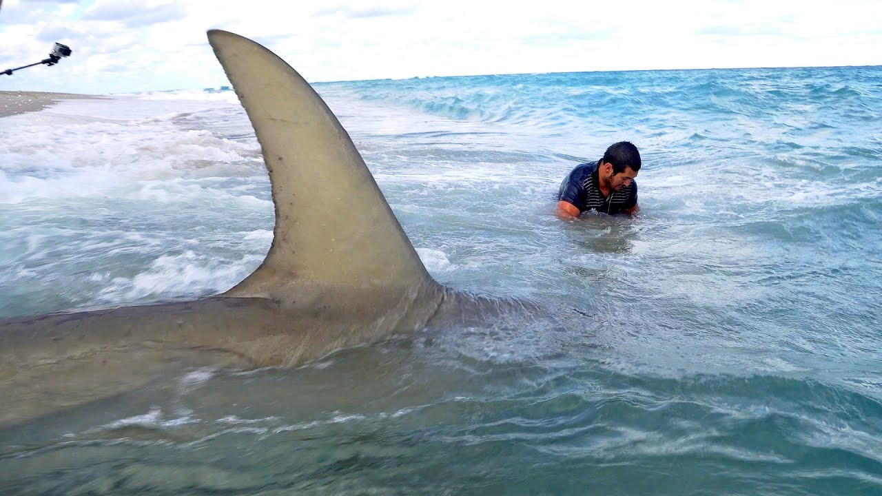 Monster Blacktiph Shark Fishing From The Beach Fin And