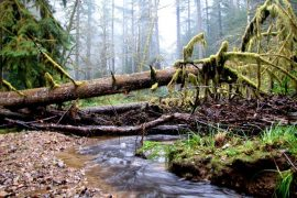 Oregon Land Board Stops Sale of Elliott State Forest