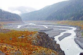 Stockers Destined for Washington's Elwha River