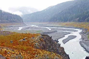 Stockers Destined for Washington's Elwha River