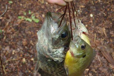Survival Skills: 3 Odd Techniques For Primitive Fishing