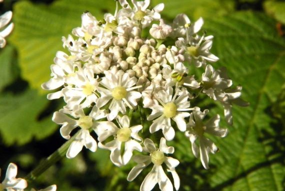 3 Wild Plants You Definitely Don't Want to Touch