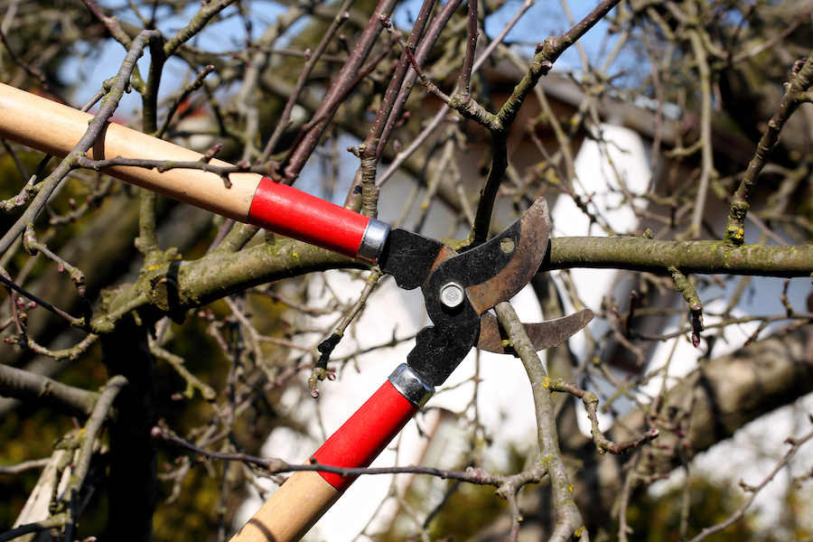 Summer hunting prep: clear shooting lanes and strategically place the branches