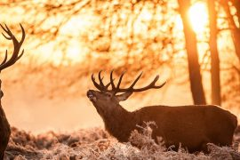 Summer hunting prep determines fall success