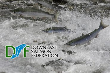 DOWNEAST SALMON FEDERATION – April Newsletter