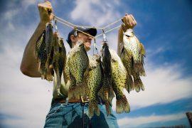 Five Stringer-Filling Tips for Summer Panfish