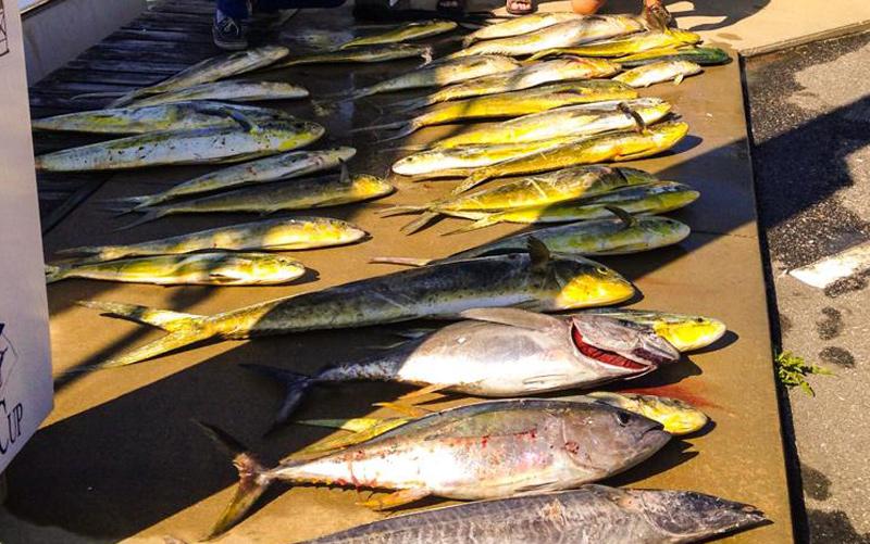 A mixed bag on Predator Sport Fishing