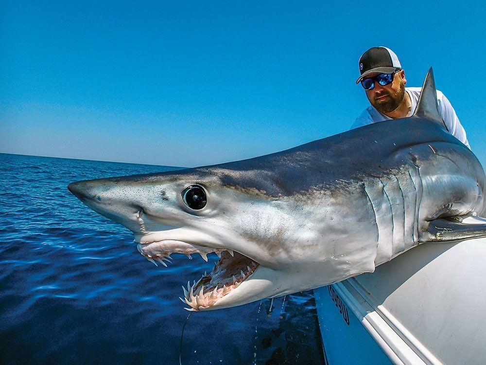Mako shark fishing fin and field blog for Shark fishing gear