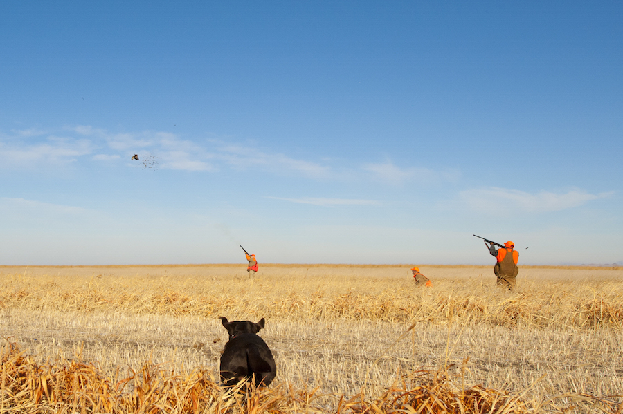 Rooster Ridge Pheasant Hunting on 7000 acres