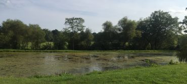 Canadian Geese Habitat