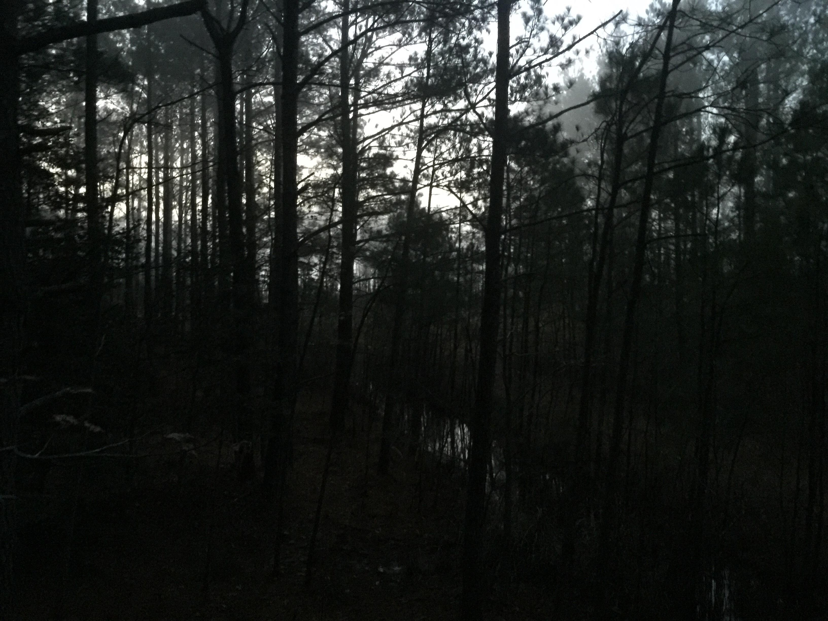 Sika Deer Treestand